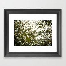 Up Through The Trees Framed Art Print