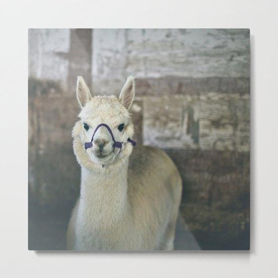 White Alpaca  Metal Print