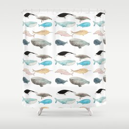 Group of whales Shower Curtain