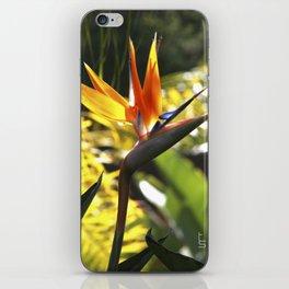 Bird of Paradise II iPhone Skin