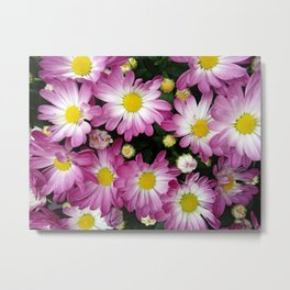 Purple chrysanthemum flowers Metal Print