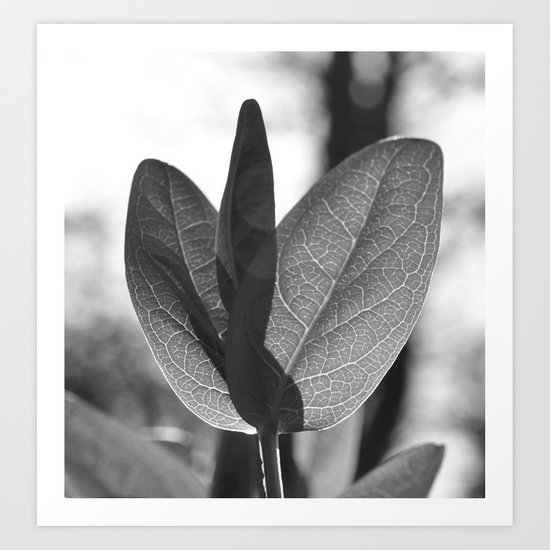 MONOCHROME BACKLIT LEAF VEINS MACRO Art Print