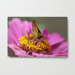 Colorful Skipper Butterfly Metal Print