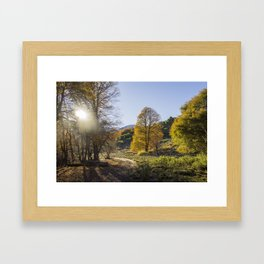 Autumn Oaks Framed Art Print