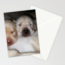 Little Polar Bears with yellow lab puppies Stationery Cards