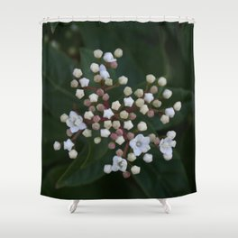 Viburnum tinus buds and flowers Shower Curtain