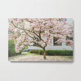 Magnolia Pink Splendor Metal Print