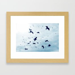Free - Seagulls fly high up in the sky. Framed Art Print