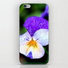 macro pansy iPhone & iPod Skin