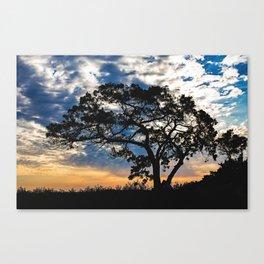 Spring Morning  Canvas Print