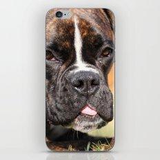 Boxer dog iPhone & iPod Skin