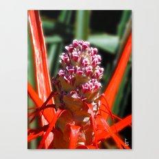 Succulent Blossom I Canvas Print