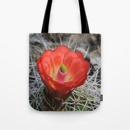 Red Blossom on a Hedgehog Cactus Tote Bag