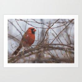 Rainy day cardinal Art Print