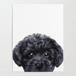 Black toy poodle Dog illustration original painting print Poster