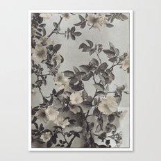 Vintage Hand Colored Dogwood Flower Canvas Print