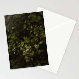 Maidenhair Vine Plant Printable Wall Art | Floral Flower Botanical Nature Outdoors Macro Photography Print Stationery Cards