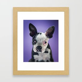Super Pets Series 1 - Super Bugsy 2 Framed Art Print
