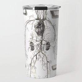 Human Anatomy Art Print VENOUS SYSTEM ARTERY Vintage Anatomy, doctor medical art, Antique Book Plate Travel Mug