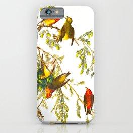American Crossbill Vintage Bird Illustration iPhone Case