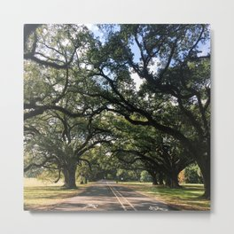 Intersecting Trees Metal Print