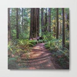Hiking The California Redwoods  9-9-18  Metal Print