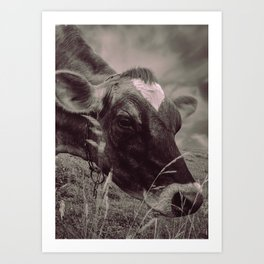 Dairy Cow Eating Grass bw Art Print