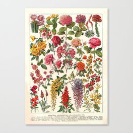 Vintage French Floral Print Canvas Print