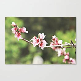 Whisp of Spring Canvas Print