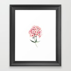 Watercolor flower phlox Framed Art Print