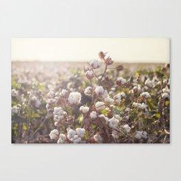 Cottonfield Canvas Print