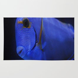 blue Tang 3 Rug