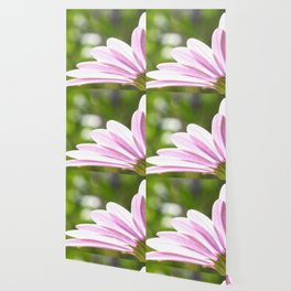 Pink African Daisy in the Light Wallpaper