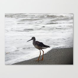 Greater Yellowlegs Watches the Surf Canvas Print