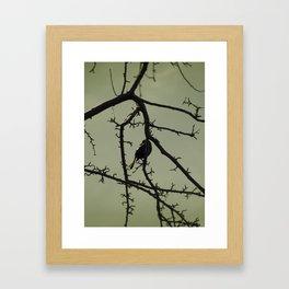 Tangled in Branches Framed Art Print