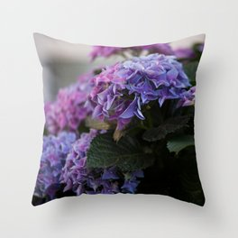 Big Hortensia flowers in front of a window Throw Pillow