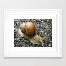 Snail Photography Framed Art Print