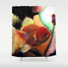 freshwater Gold fish Shower Curtain