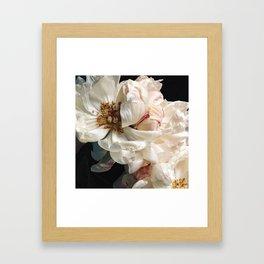 Coral Charm Framed Art Print