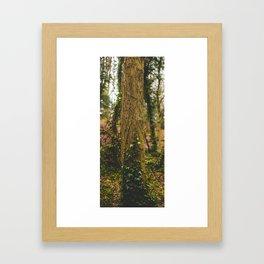 Forest Vine Framed Art Print
