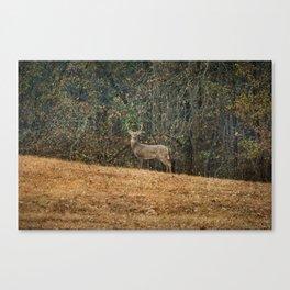 Buck At Pinson Mounds Canvas Print