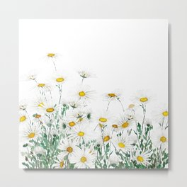 white margaret daisy horizontal watercolor painting Metal Print