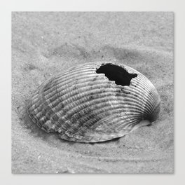 broken shell, black and white Canvas Print