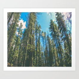 Follow the Forest Art Print