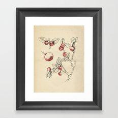Cabinet of Curiosities No.4 Framed Art Print