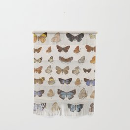 Vintage Scientific Insect Butterfly Moth Biological Hand Drawn Species Art Illustration Wall Hanging
