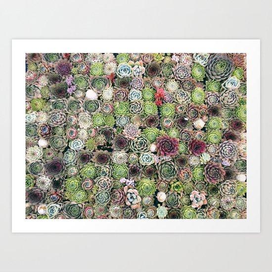 succulent party  Art Print