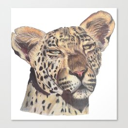 leopard dark Canvas Print