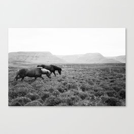 Black and White Horses - Iceland Canvas Print
