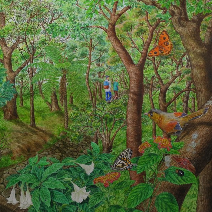 A Day of Forest (1). (walk into the forest) Comforters